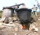 ローズマリー水蒸気蒸留